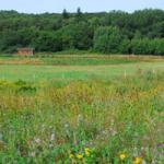 Les prairies sèches