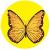 Circuit du papillon